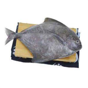 Fresh Black Pomfret Fish Singapore