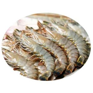 Frozen Tiger Prawn Singapore