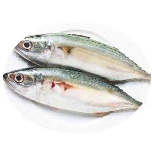 Fresh Kembong Fish Singapore