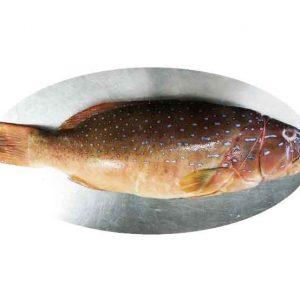 Fresh Red Grouper Fish Singapore
