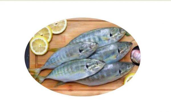 Fresh Selar Fish Singapore